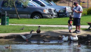 Feeding the ducks is one of the many features Wilderness Park has for residents and community members to enjoy while at the park. Photo by: Alicia Edquist